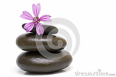 A mauve flower on three stones.