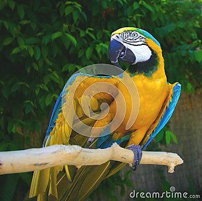 Max av papegojauppvisning