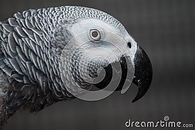Max our pet parrot