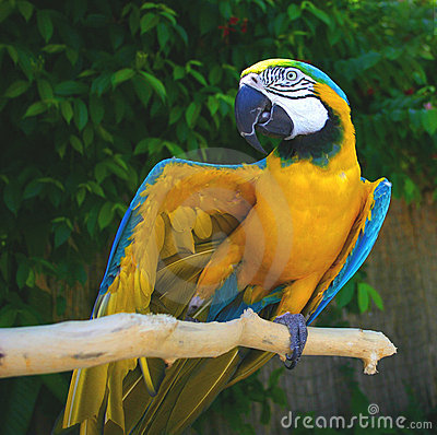 Max the parrot - Showing Off!