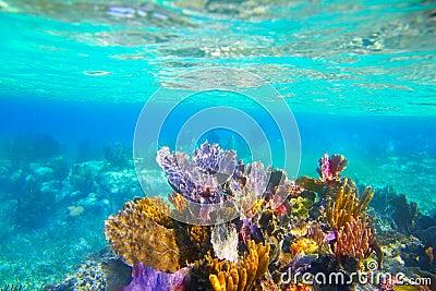 Mayan Riviera reef snorkel underwater