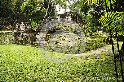 Mayan ruins in the forest
