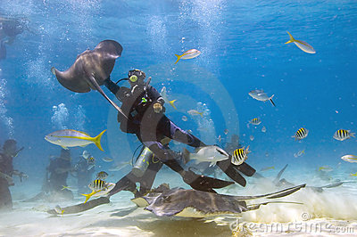 Mayhem in Stingray City, Grand Editorial Stock Photo