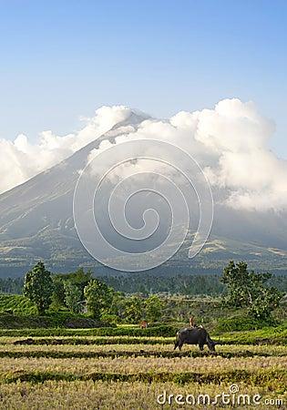 Mayon Volcano