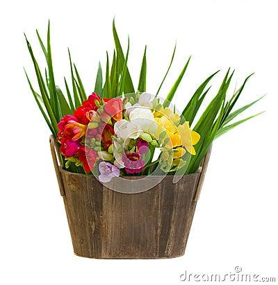Mazzo dei fiori di fresie in vaso di legno fotografie for Mazzo per esterni in legno