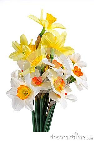 Mazzo del narciso giallo e bianco fotografia stock for Narciso giallo