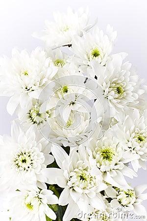 Mazzo di fiori bianchi del mazzo del garofano immagini for Disegni del mazzo del cortile anteriore
