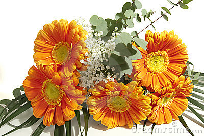 Mazzo di fiori del gerbera immagini stock immagine 12801514 for Disegni del mazzo del cortile