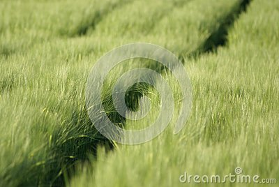Meadow Stock Photos - Image: 14632083