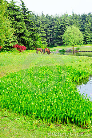Free Meadow Stock Photography - 8979442