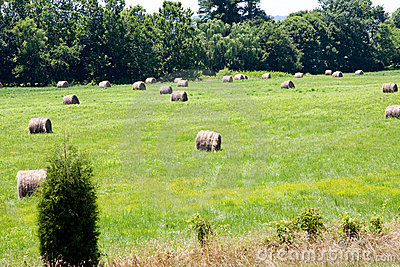 Meadow with bales of hay