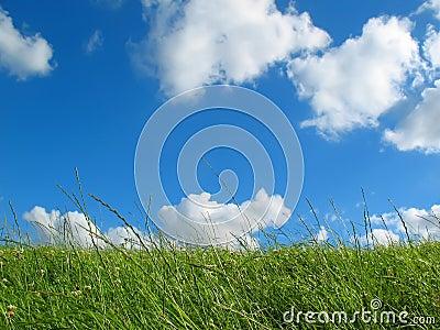 Meadow with blue sky