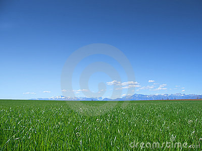 Meadow and blue sky