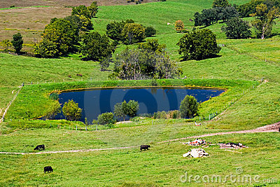Meadow with cows and pool