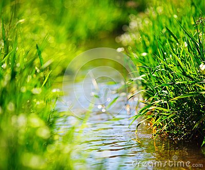 Meadow creek with green grass