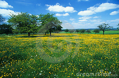 Meadow with flowers 3