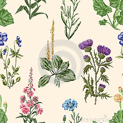 Free Meadow Flowers Pattern Stock Photography - 65617022