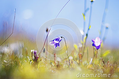 Meadow with grass and flowers
