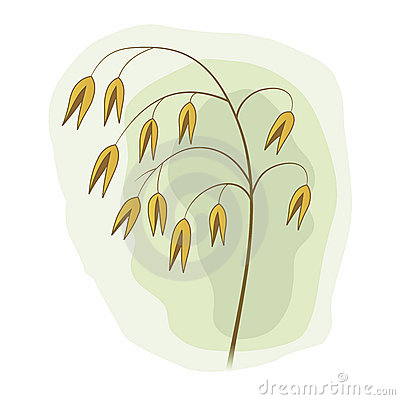 Meadow grass stem with yellow seeds
