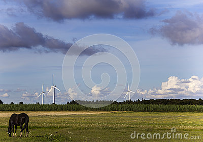 Meadow with horse and windmill