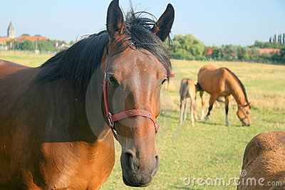 Meadow Horses Royalty Free Stock Photo - Image: 5979445