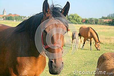 Meadow horses