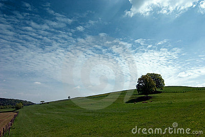 Meadow with lone trees