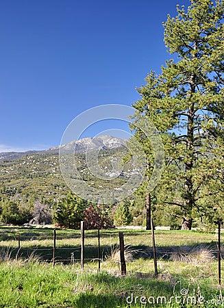 Meadow Pine
