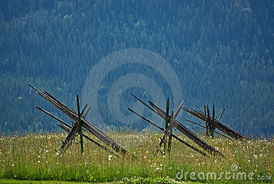Meadow with poles
