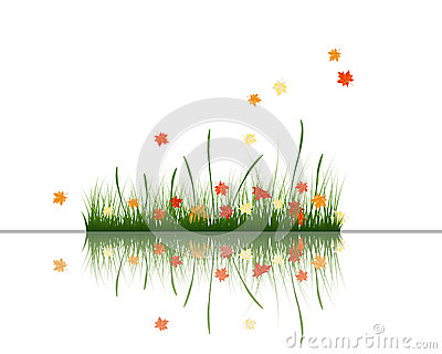 Meadow with reflection