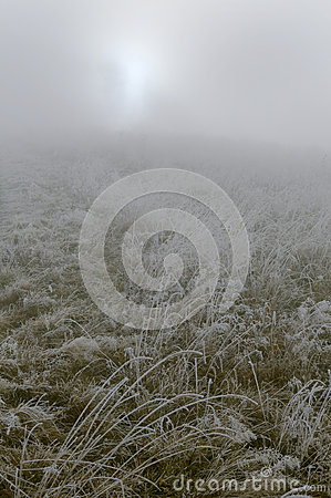 Meadow with rime