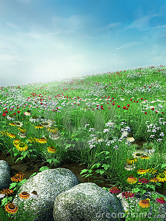Meadow with rocks