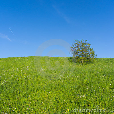 Meadow with Single Tree