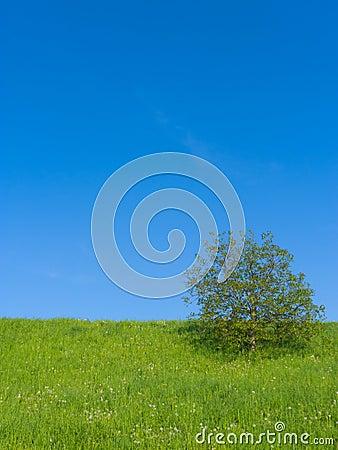 Meadow with Single Tree