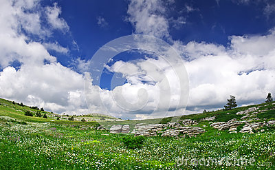 Meadow and sky