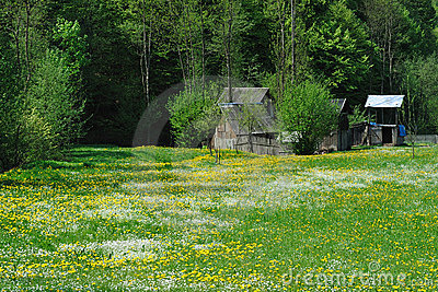 Meadow in spring