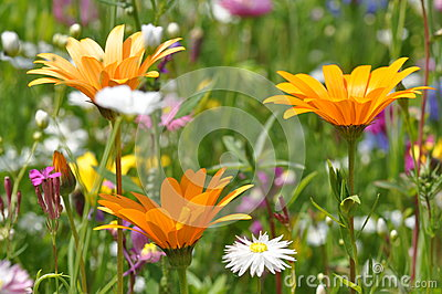 Meadow with summer flowers