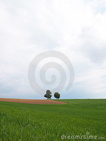 Meadow with two trees