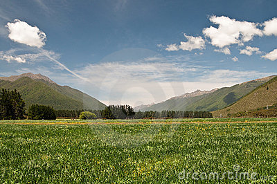 Meadow at Wairau Valley
