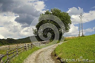 Meadow way