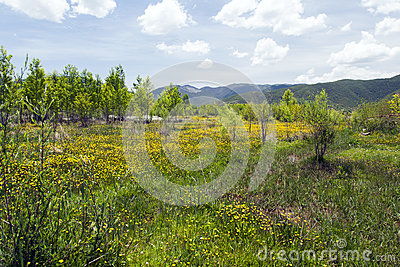 Meadow of Yellow Wildflowers