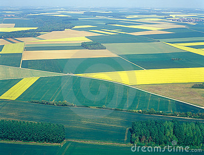 Meadows and fields. Aerial image.