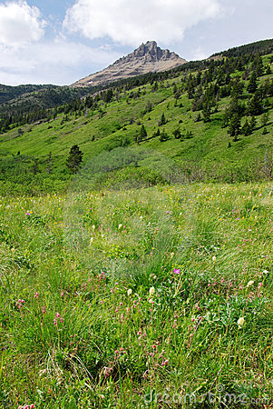 Meadows, forests and mountain