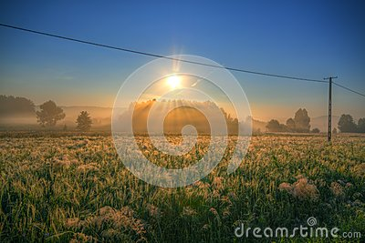 Meadows on morning with power line
