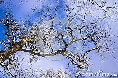 Meandering tree branch