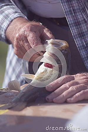 Measuring a fish