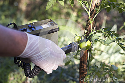 Measuring radiation levels of tomato