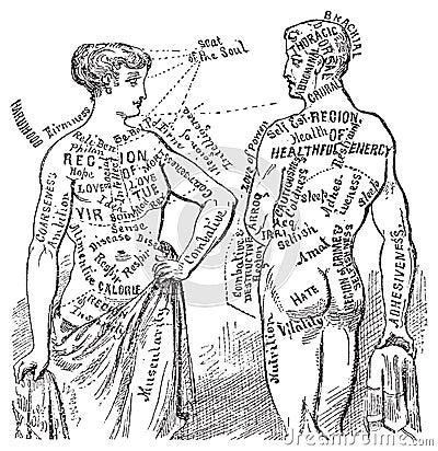 Medical anotomical vintage diagram illustration
