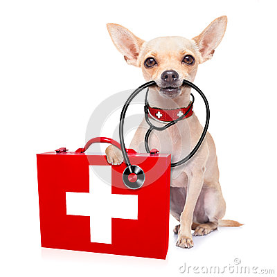 Free Medical Doctor Dog Stock Photos - 52732963