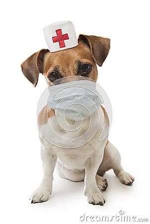 little funny dog nurse medical gauze mask and cap white background